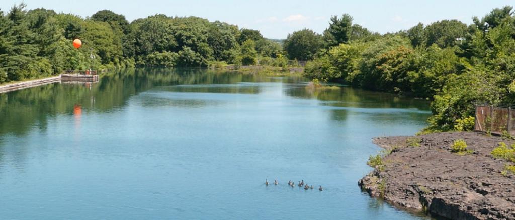 ducks swimming at Levine Reservoir